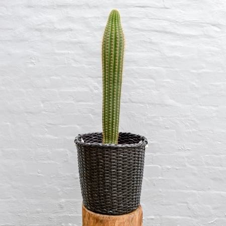 Cactus 300mm - Sold Separately
