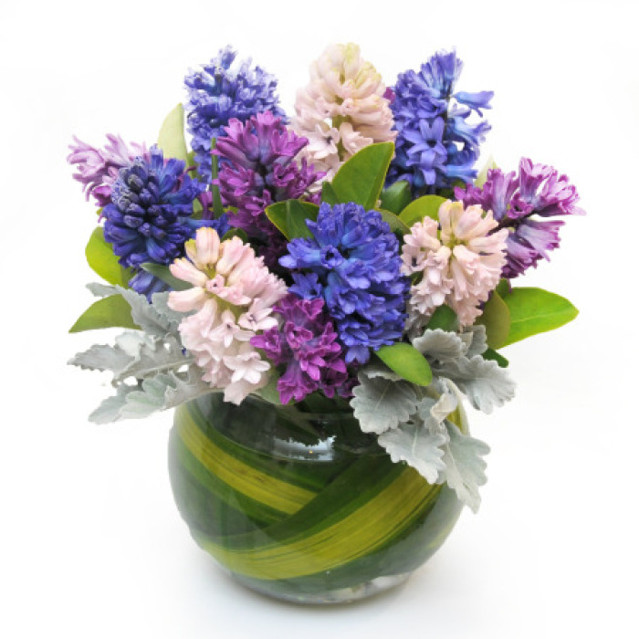 Hyacinths - Sweet Smelling Winter Flowers