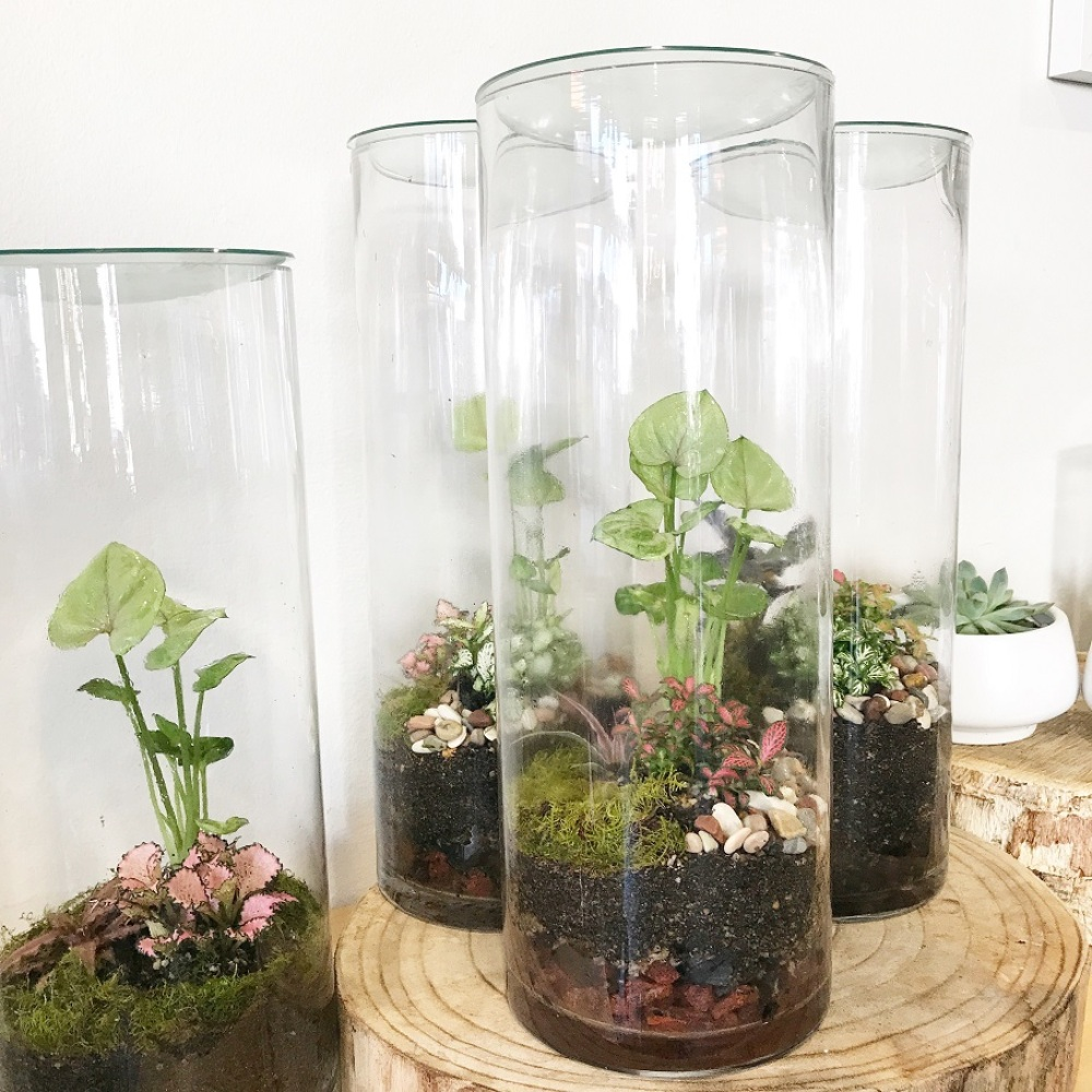 Forest Tropic Terrarium