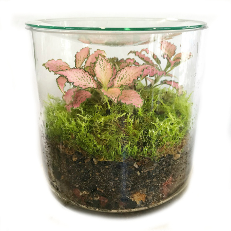 Forest Mini Terrarium