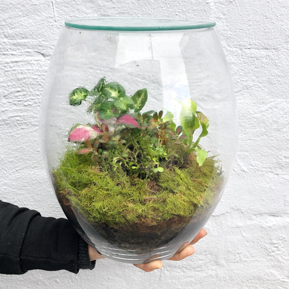 Forest Eco Terrarium