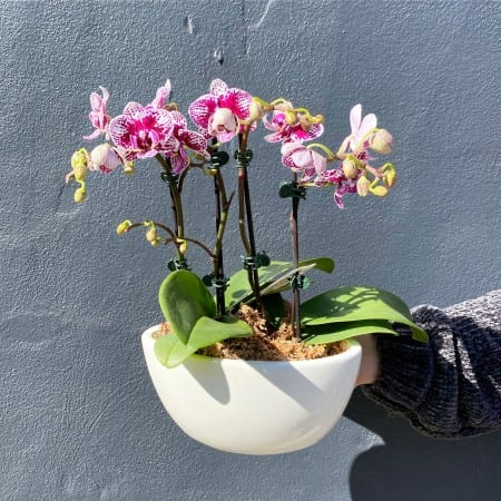 Mini Orchid Boat