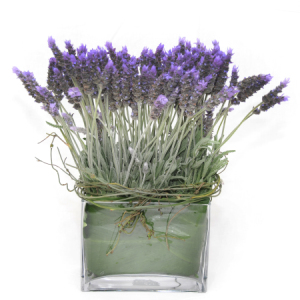 Lavendar Garden - NOT IN STOCK